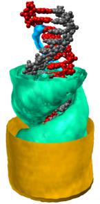 Struktur der Gegenionenwolke in drei Dimensionen.