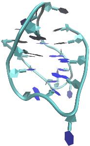 DNA G-Quadruplexstruktur Basket