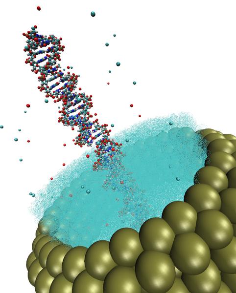 Ein DNA-Molekül in einer zylindrischen Pore. Die DNA ist umgeben von Wassermolekülen sowie einer gewissen Anzahl Ionen. Entlang der Pore ist eine Spannung angelegt und in Simulationen wird der elektrische Strom gemessen. Dies ist ein einfaches Modell für den DNA-Transport durch Nanoporen, einer interessanten Technologie zur Sequenzierung von DNA.