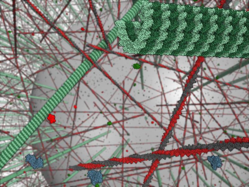 Simulation einer vereinfachten Zelle mit 25 Milliarden Atomen.